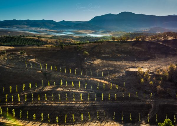 Agricultural field at sunrise in Ronda, Andalucia, Spain